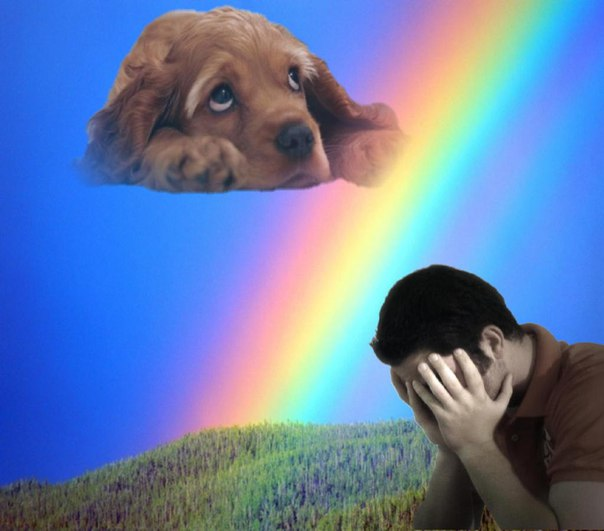 Картинки собака радуга