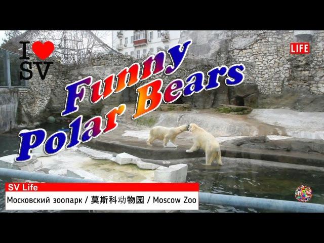 Смешные Белые Медведи Московский Зоопарк 有趣的北极熊。 莫斯科动物园 Funny Polar Bears Moscow Zoo SV Life
