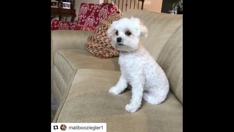 Maliboo's instagram 2