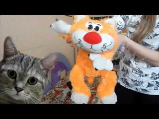 Котики Манчкины (кошки-таксы)