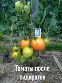 Уважаемые садоводы!