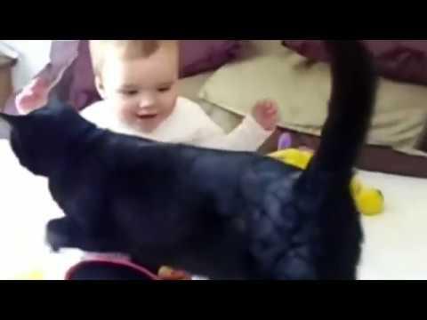 Подборка смешных котиков с детьми Funny cats