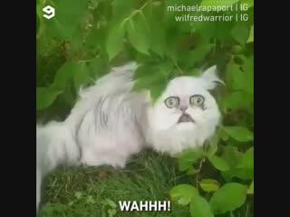 Самый красивый котэ