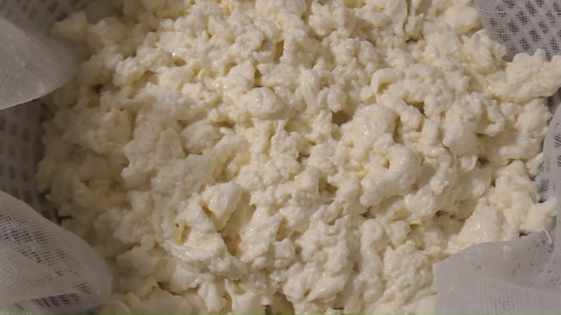 Творог из молока с ферментом Как сделать творог в домашних условиях Сыроварня Тремасова