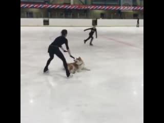 Загитова вышла на лед с собакой