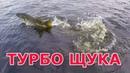 БОЛЬШАЯ ЩУКА дала жару! Рыбалка на болотах в сибири 2019. Ловля щуки на джеркбейт. 2 серия
