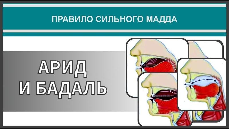Айман Сувейд 43 Правило сильного мадда АРИД И БАДАЛЬ с субтитрами на русском