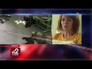 Шок! 65 кошек и 1 собака погибли в приюте при неизвестных обстоятельствах!