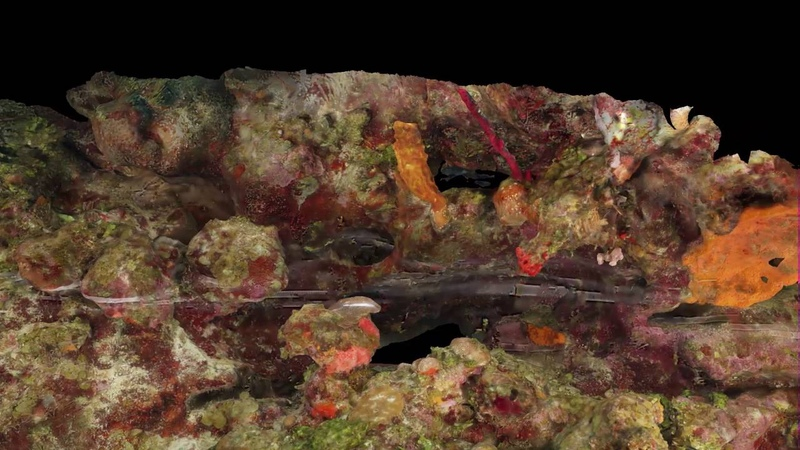 Belize coral reef outer ridge photogrammetry
