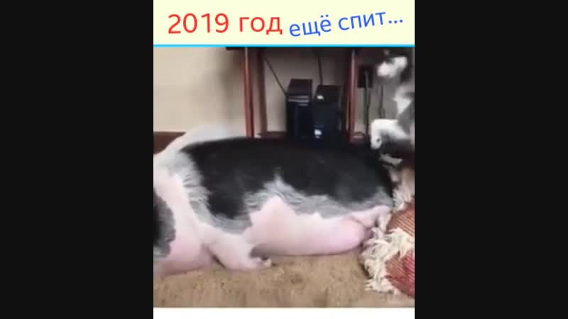 Video 1bfbe7b0a03b88afae8f581eee4f80d1