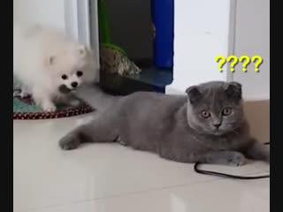 Женские Хитрости () кошки и собаки