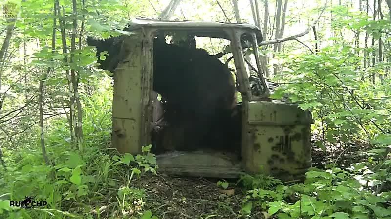 Медведь и тигр в кабине ГАЗ-66