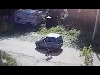 В Елабуге мужчина привязал тросом собаку к машине и доехал так до производственной базы