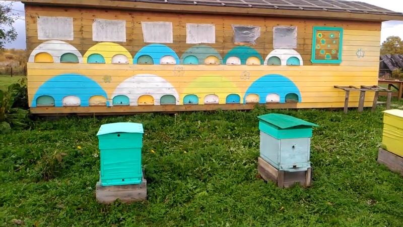 Поздняя подкормка для помощи облета молодой пчелы