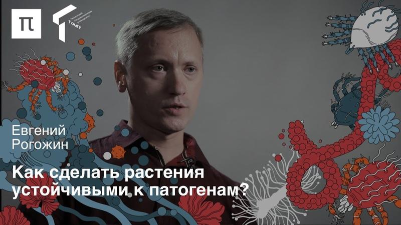 Пептиды в сельском хозяйстве — Евгений Рогожин ПостНаука