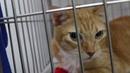Как сделать инъекцию инсулина кошке с диабетом / How to give insulin injection to a diabetic cat?