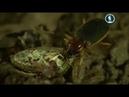 насекомые документальный фильм