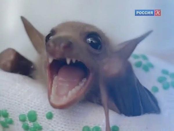 Встреча на вершине Татьяна Черниговская 7 выпуск 2014