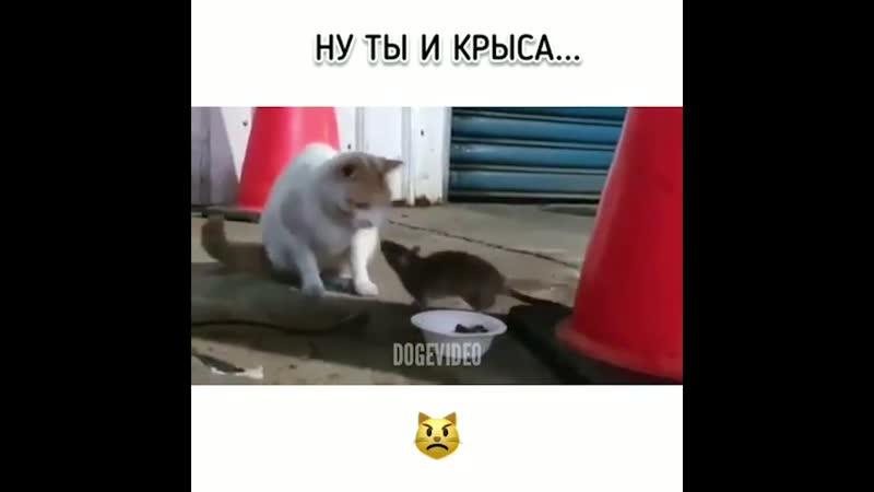 Ну ты и крыса