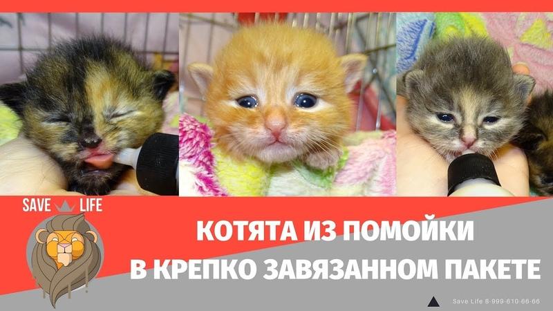 Помойка как приговор Новая жизнь котят Продолжение следует