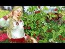 Курс обучения травников 100 главных трав Руси ответы на вопросы