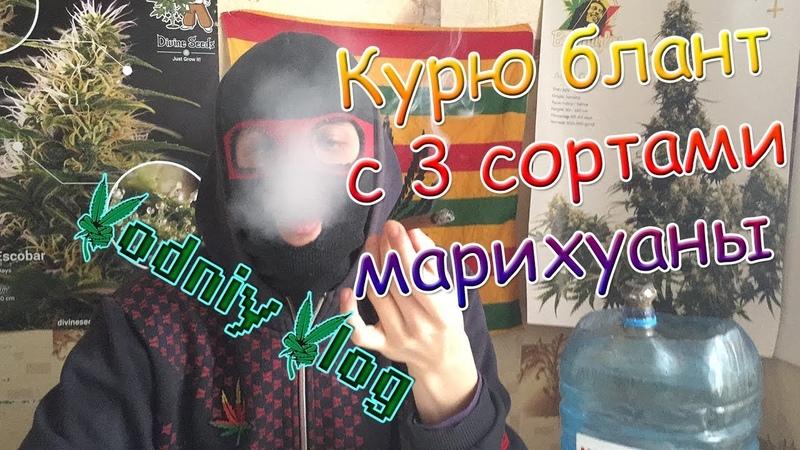 3 сорта марихуаны в 1 бланте | Vodniy Vlog | Курю индику