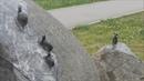 Великий Новгород скульптура Улитки на склоне и японец Кобаяси Исса в веряжском сквере