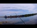 Большая река, не означает больше рыбы или ещё не время. Устье Северского Донца. Дон. Спиннинг.
