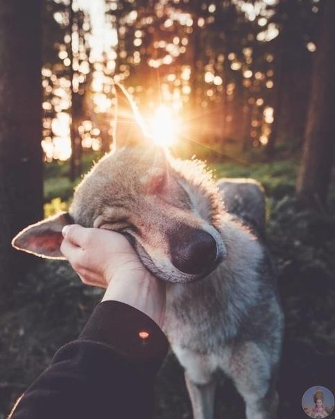 Хонза Рехачек - фотограф из Чехии, который обожает природу, путешествия и своего волкодава по кличке Ситка