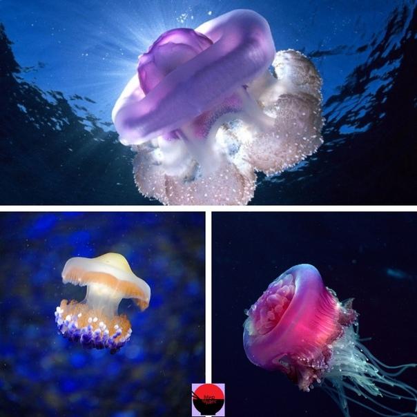 у медуз нет сердца картинки дорогая подруга