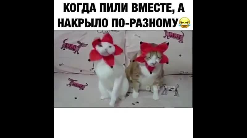 VIDEO 2019 10 09 16 48