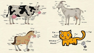 Cat Parts, Goat Body Parts, Parts of a Cow & Parts of a Horse with Animal Body Parts Pictures