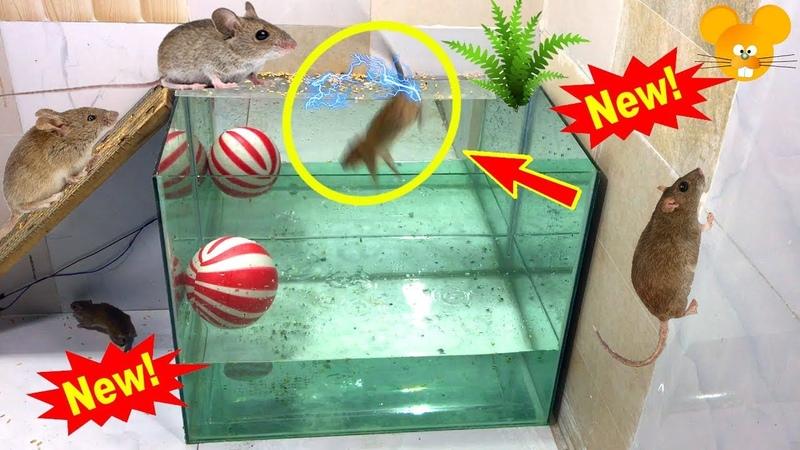 Kaca baru perangkap Tikus / Terbaik perangkap tikus air buatan rumah / perangkap tikus listrik 12v