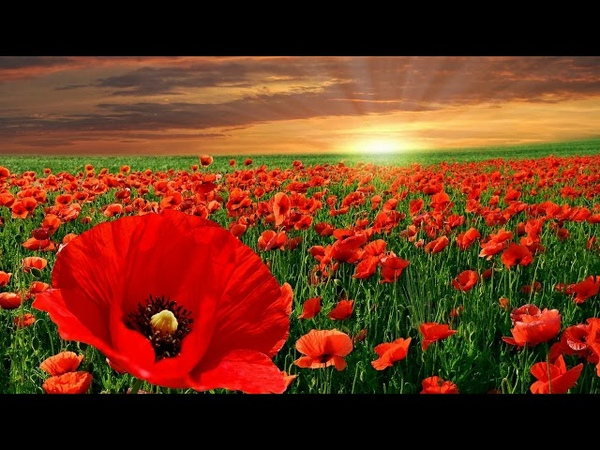 Reinhold Gliere, The Red Poppy Suite op 70