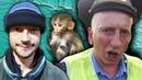 🐵 Анекдот про обезьяну и гаишника Анекдоты смешные до слез Анекдоты от Ведагора