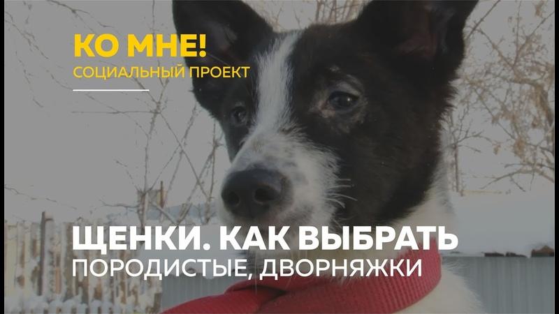 «Ко мне!» дворняжка или породистая собака как выбрать щенка