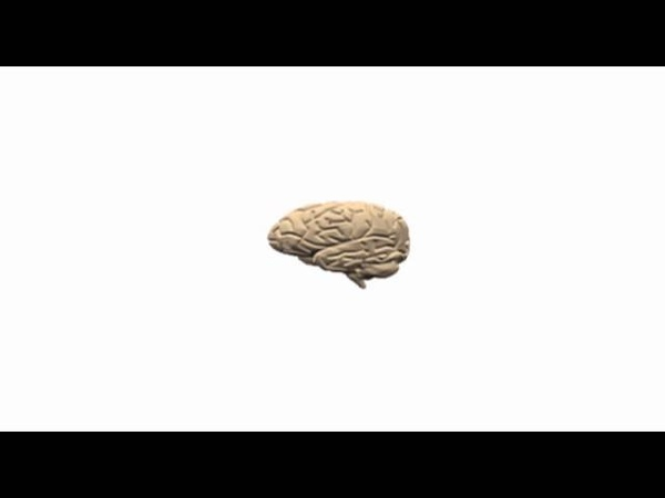 A Little Brain Music Sounds of Your Brainwaves Video