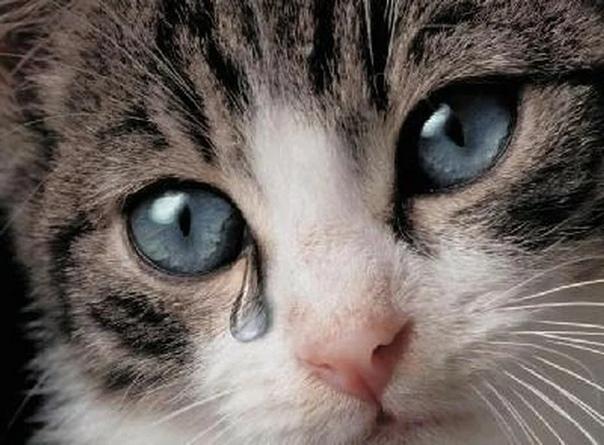 Котенок в слезах картинки мокрый снег