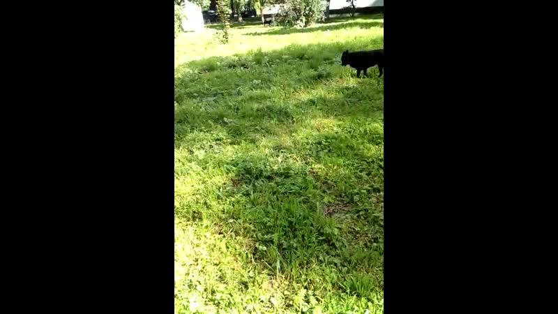 VIDEO-2019-08-16-13-48-15.3gp