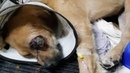 Rescue Poor Abandoned Dog Got Injured In Eyes And Legs