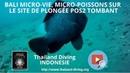 Bali micro vie, micro poissons sur le site de plongée POS2 Tombant avec Thailand Diving Pattaya Club