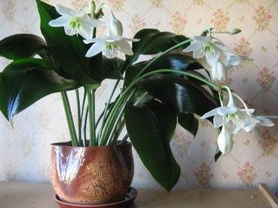 Белые цветы в интерьере вашего дома