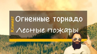 Как лесные пожары создают свою собственную погоду и «огненные торнадо»