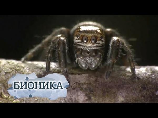 Бионика Власть паутины