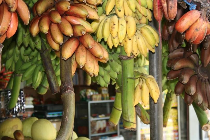 Гид по фруктам Шри-Ланки, изображение №2