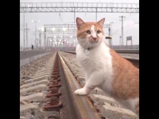 Кот Мостик оценил ж/д часть Крымского моста