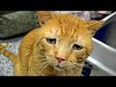 Кот преодолел 7000 км и вернулся домой Худой грязный с порванным ухом но он нашел дорогу