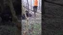 Бомбическое видео охоты на кабана , все охотники на деревьях