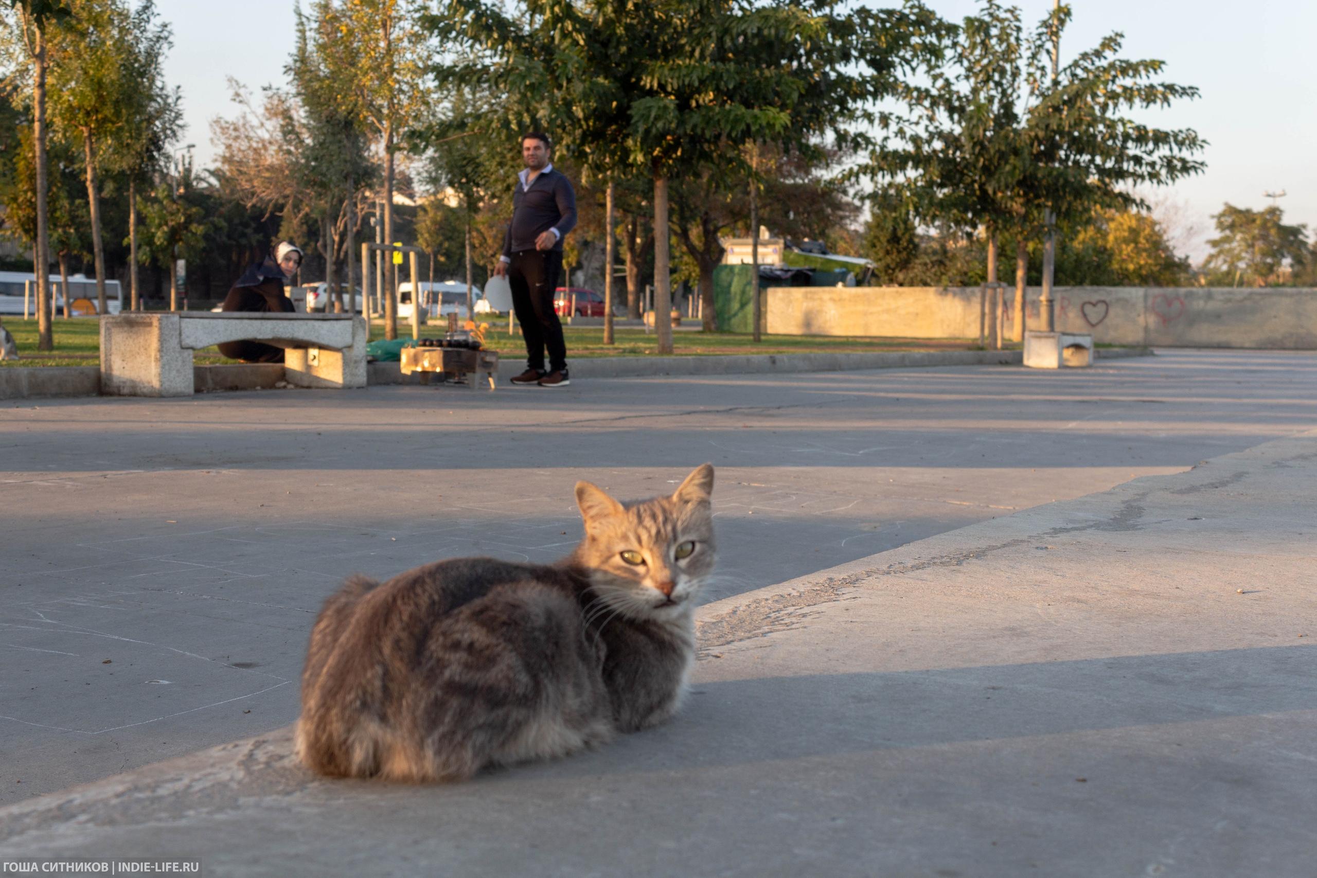 Кот и шашлыки