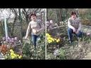 Когда обрезать розы Весной или осенью И когда окучивать розы